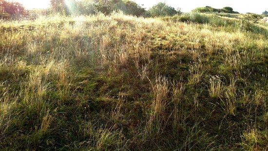 Campingplatz Palisadendiek: Grasdünen verleihen Privatatmosphäre
