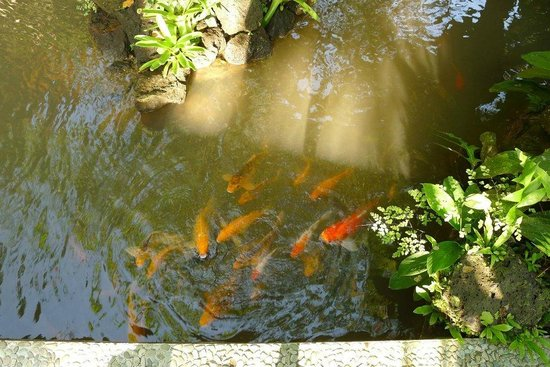 Gustis Garden Bungalows: little lake in the garden