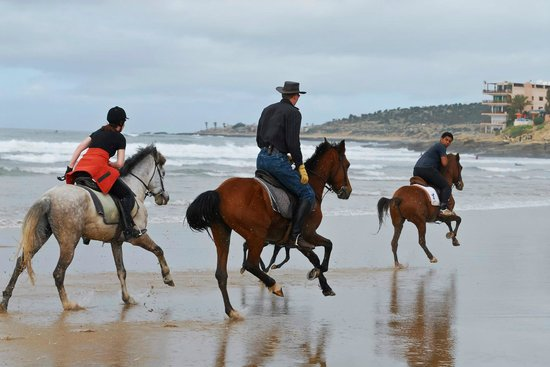 Ranch Amodou Cheval: Horse