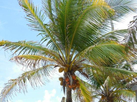 Matachica Resort & Spa: Palm trees