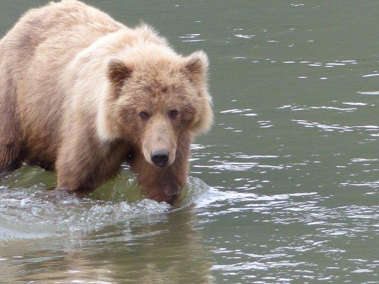 Bear Camp: bear