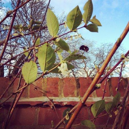 The Star Inn Bed & Breakfast : Autumn gardens