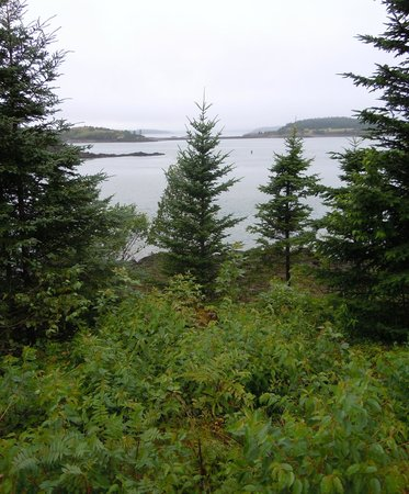 An Island Chalet: View from the cottage