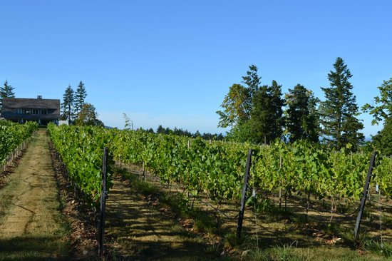 de Vine Vineyards