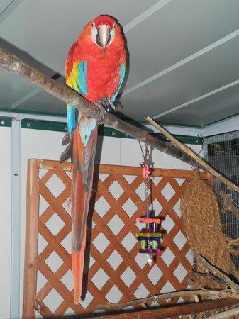 Aragonese : Papagei