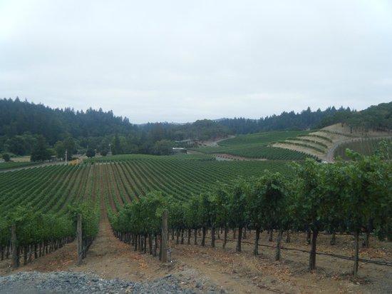 Lancaster Estate Winery: pretty