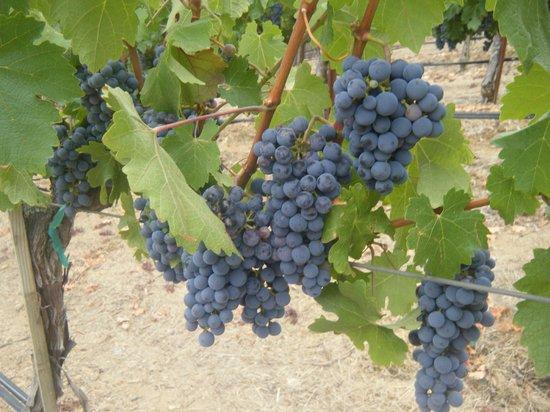 Lancaster Estate Winery: yum