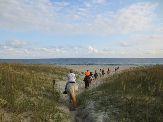 Equine Adventures: Over the dunes to the beach!