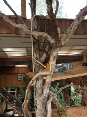 Treehouse Skye: Neat view of live tree within treehouse