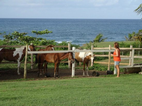 Hector's by the Sea: If you luv horses this is the place for you