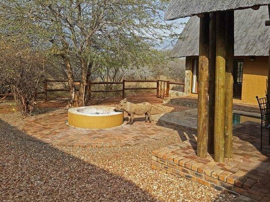 Hoedspruit Wildlife Estate: Visitor to the Lodge