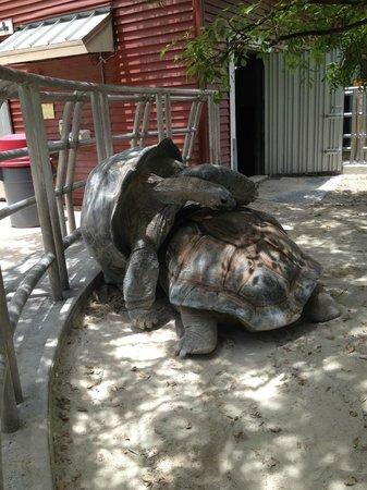 Jungle Island: tortugas una de 90 añosy otra de  110 años