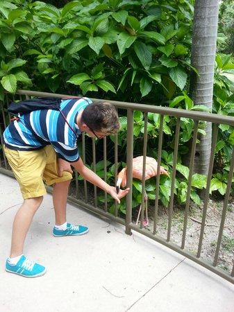 Jungle Island: dando de comer