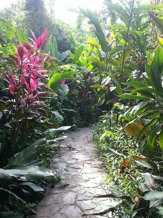 Maya Mountain Lodge: Walkway to the pool