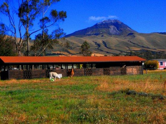 Chuquiragua Lodge & Spa: Este es el establo donde estan los cuyes u conejos tambien podemos ver a Lancelot y Mia que
