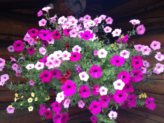 R Lazy S Ranch: Gorgeous flowers on lodge porch