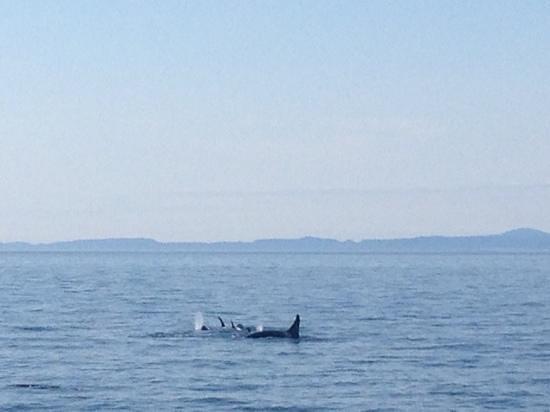 Foto de Orcas Island Eclipse Charters
