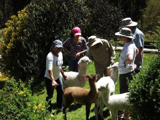 Las Casitas del Colca: Alimentando animalitos...