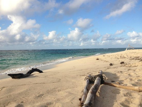 Isaac Bay: Driftwood and sand