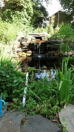 The Wellshire Bed and Breakfast: Koi fishpond in garden