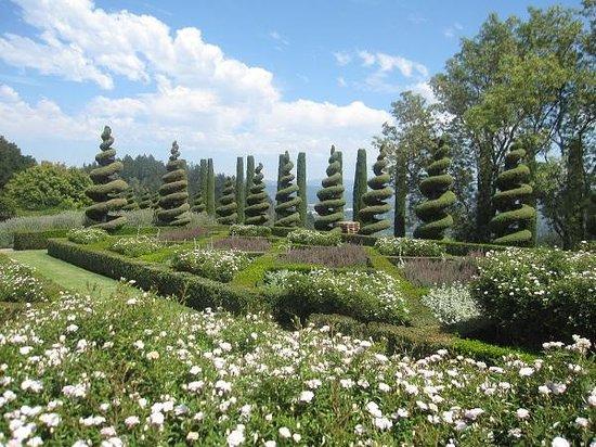 Newton Vineyard Gardens_August_2013