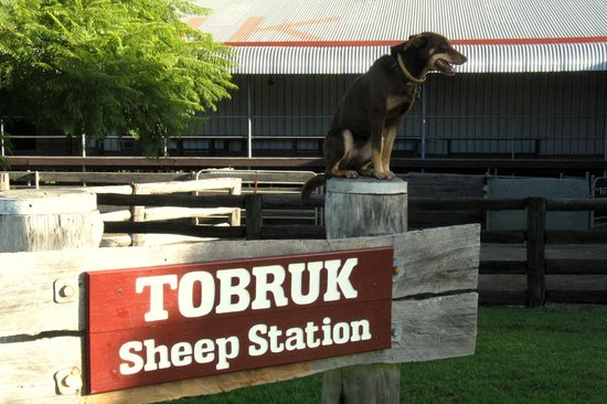 ‪Tobruk Sheep Station‬