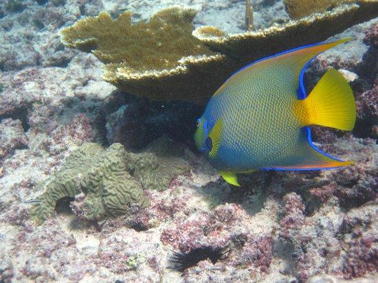 San Andres, Colombia: mergulho em San Andrés - Ilha Jhonny Cay