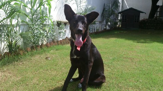 Dehradun Homestay: mario growing up fast....he is so powerful and handsome!