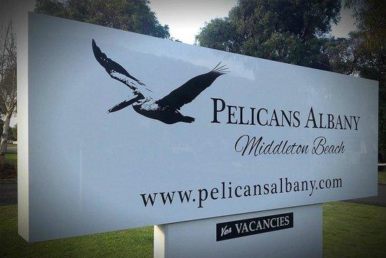 Pelicans Albany