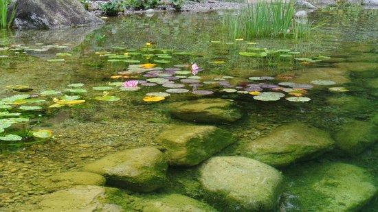 Hotel Salzburgerhof: the swimming pond in the hotel courtyard