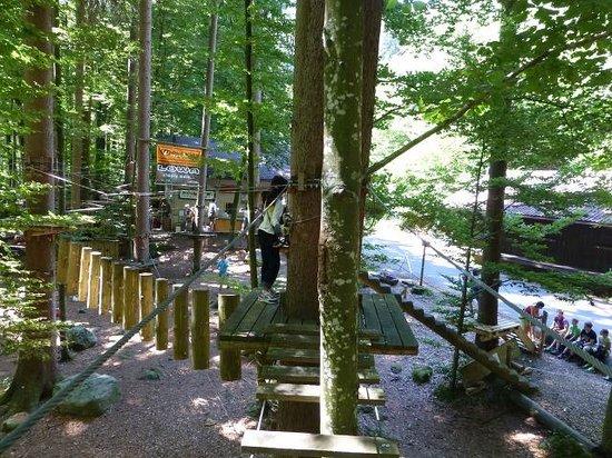 Seilpark Interlaken: 木のステージから次のステージへ