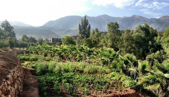 Domaine Malika : Surrounding area