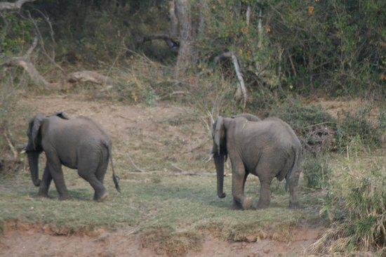 Kurhula Wildlife Lodge: Flussufer gegenüber..imposanter Besuch, manchmal auch hautnah im Garten