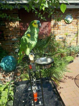 "Vivilore: ""Jimmy"" resident Parrot"
