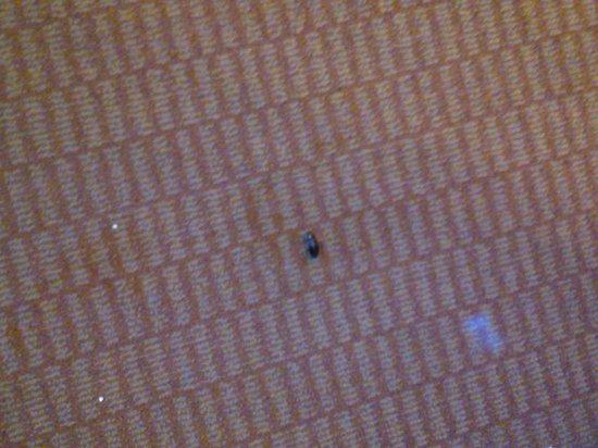 Whiskey Pete's Hotel & Casino: roach #7