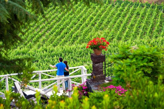 Wine Resort Villagrande: View