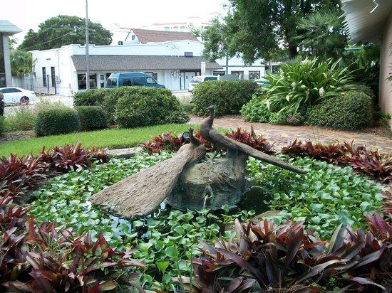 Ormond Memorial Art Museum: Beautiful Peacock fountain
