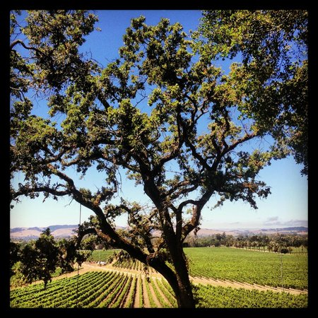 Swing Picture Of Scribe Winery Sonoma Tripadvisor
