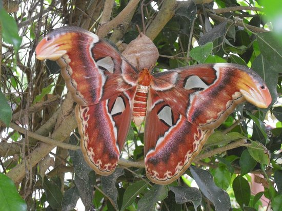 L'Ile aux Papillons : .