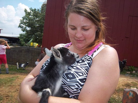 Stone Haus Farm Bed and Breakfast: baby goats