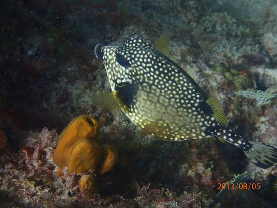 Mamora Bay Divers