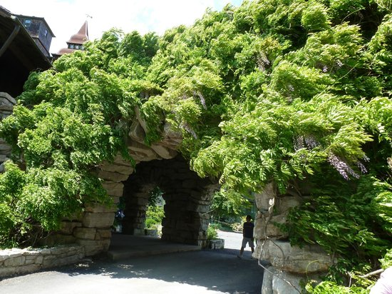 Mohonk Mountain House: A profusion of Wisteria