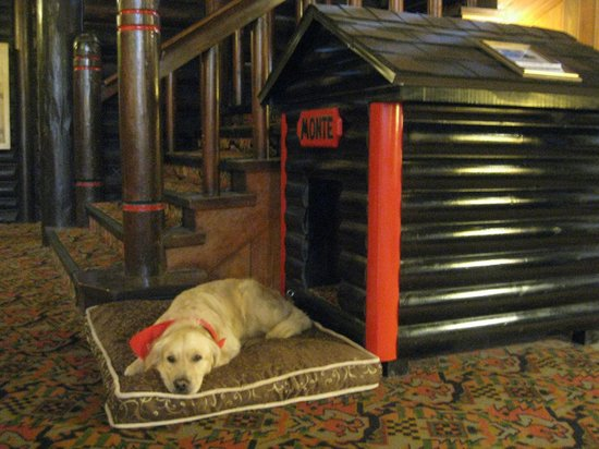 Fairmont Le Chateau Montebello: Monte, the hotel dog