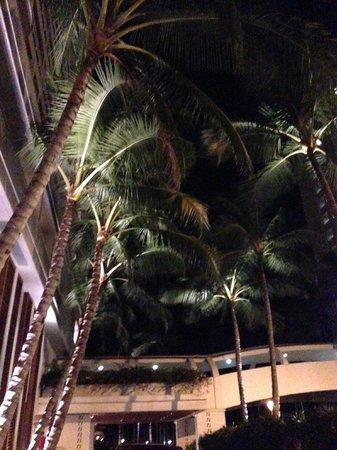 The Modern Honolulu: Hotel palm trees