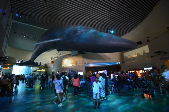 Aquarium Of The Pacific Main Lobby
