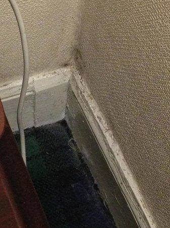 Cairn Hotel Edinburgh: Dusty carpet, mouldy wall