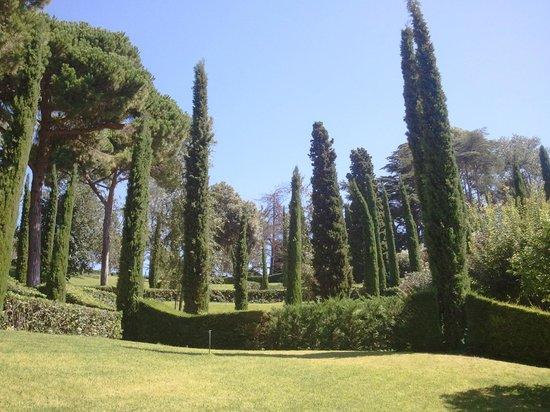 Jardin Santa Clotilde : cypres