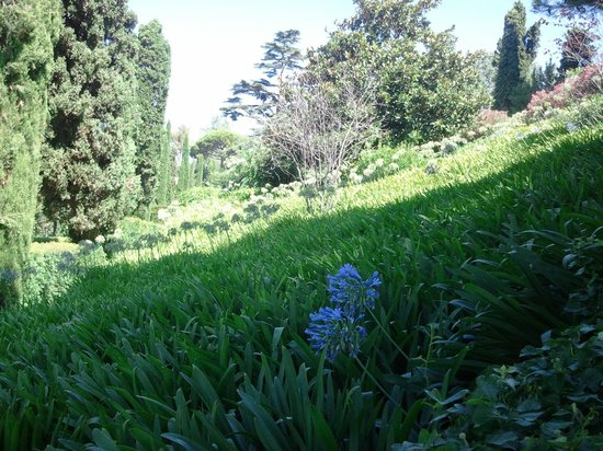 Jardin Santa Clotilde : jardin agapanthe