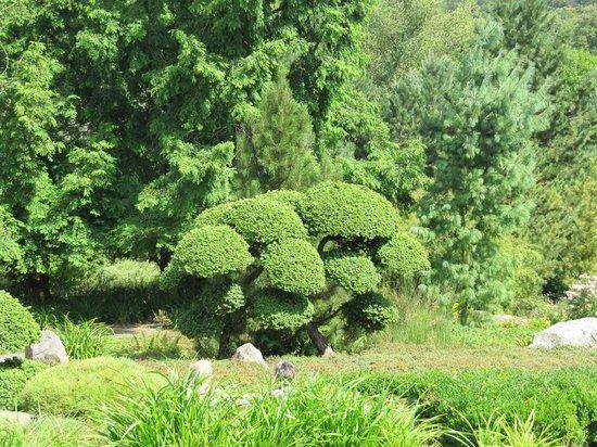 Mondo Verde: Japanischer Garten