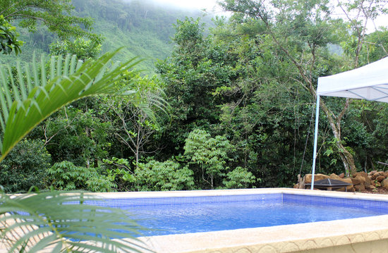 La Tierra Divina: Jungle View from Pool